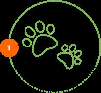Höper Tierversicherungen Pfoten Schritt 1