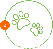 Höper Tierversicherungen Pfoten Schritt 2